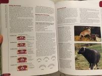 Condition Scoring Sheep